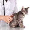 Ветеринарные клиники в Кирове
